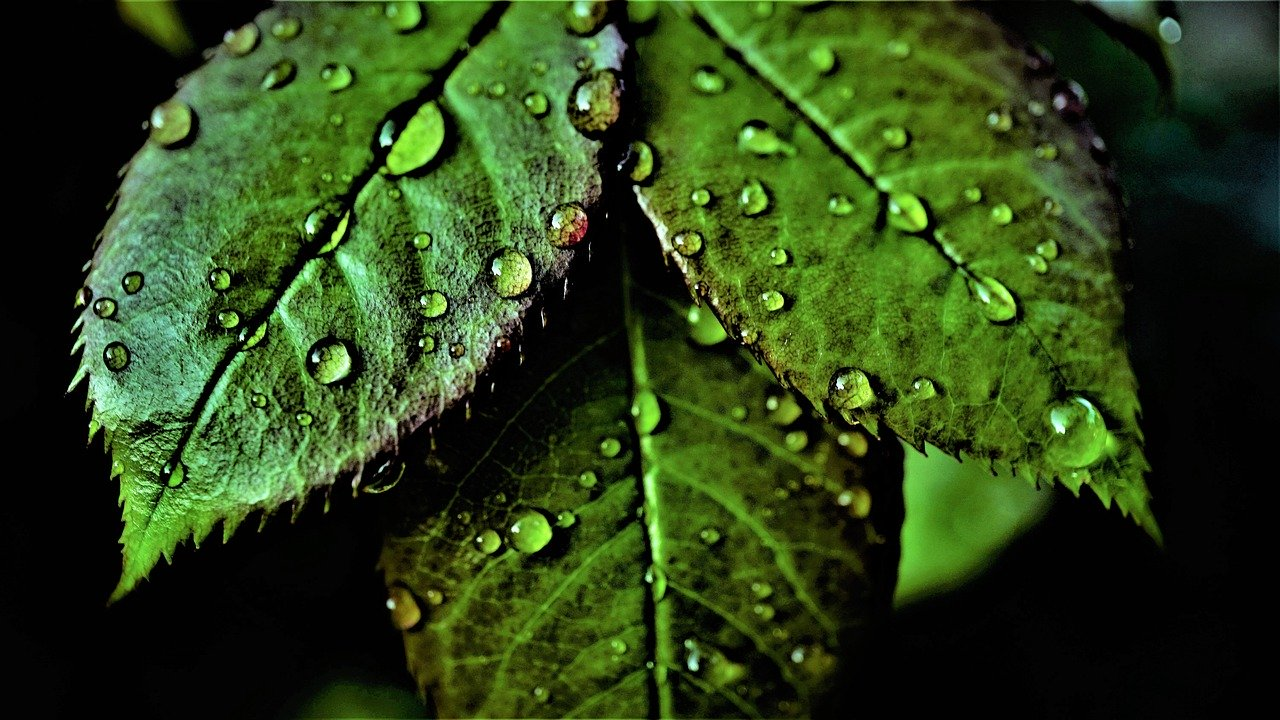 leaves, green, chlorophyll