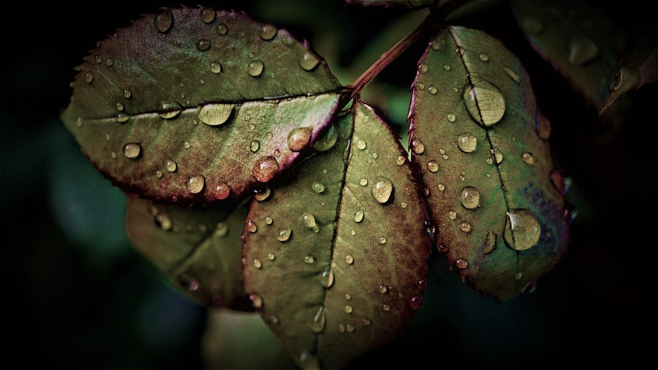 rainy weather, leaves, water